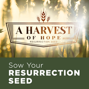 A Harvest of Hope Resurrection Seed